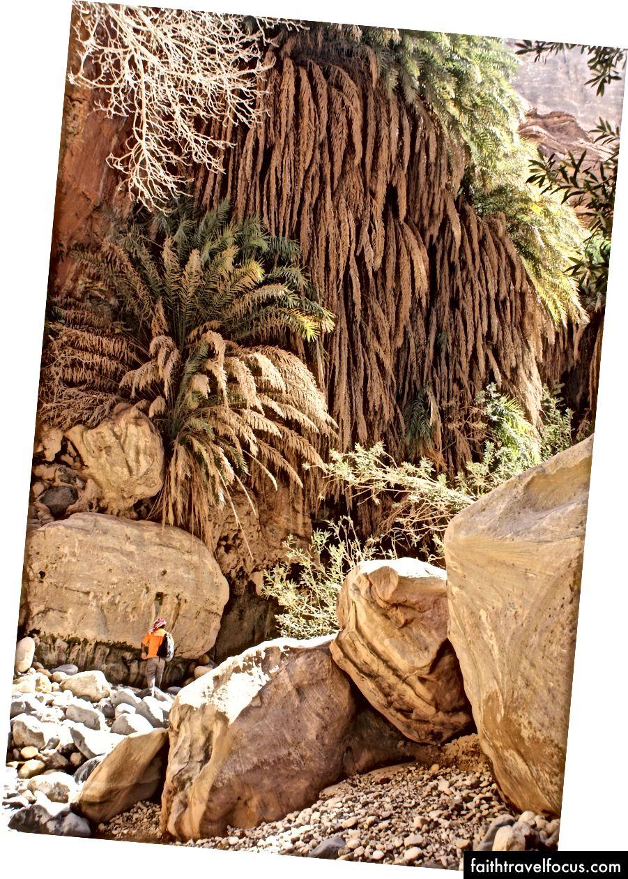 Hướng dẫn sinh thái Mohammad Daifallah đi bộ bên dưới thảm thực vật lộn xộn khi bắt đầu hẻm núi Wadi Ghwayr.