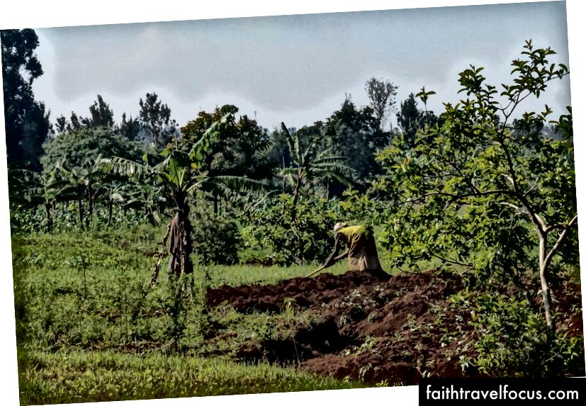 Dự án nông nghiệp cộng đồng Rwamagana