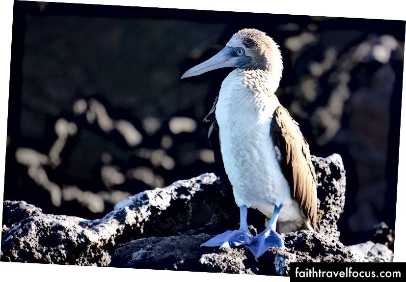 Перша тварина, яка привітала нас вранці, - знаменитий синій ніс