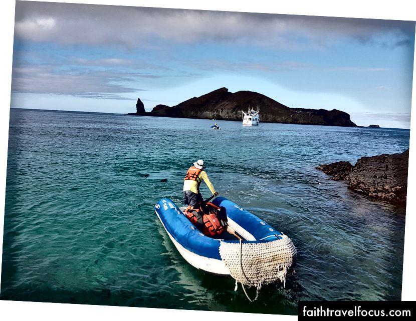 Побачте наших друзів, що плавають поруч із панга