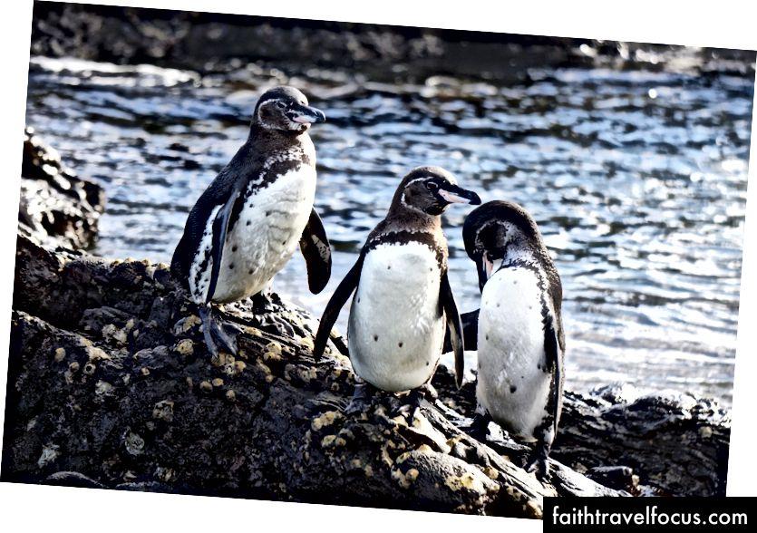 Пінгвіни!