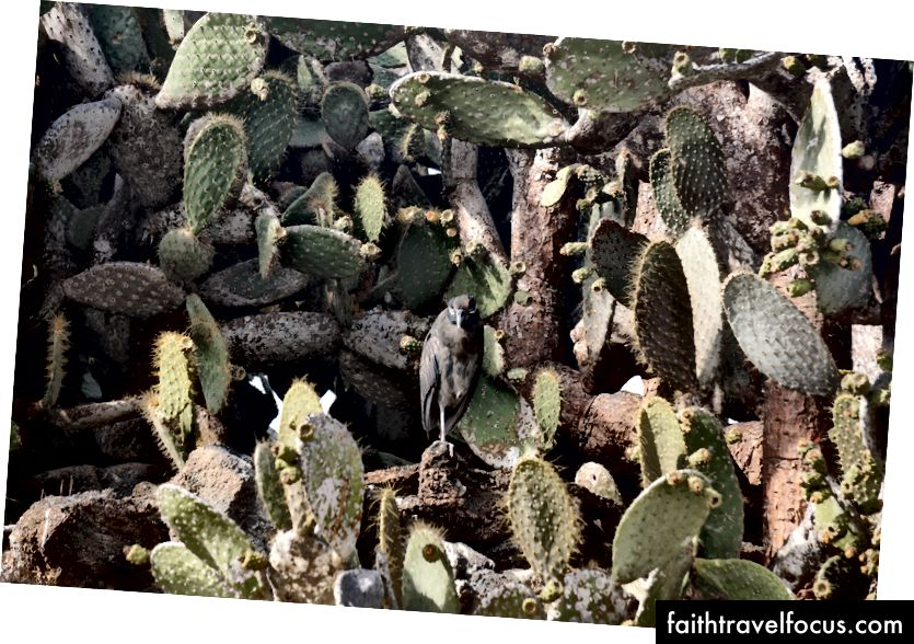 Ще одна чапля ховалася між кактусами