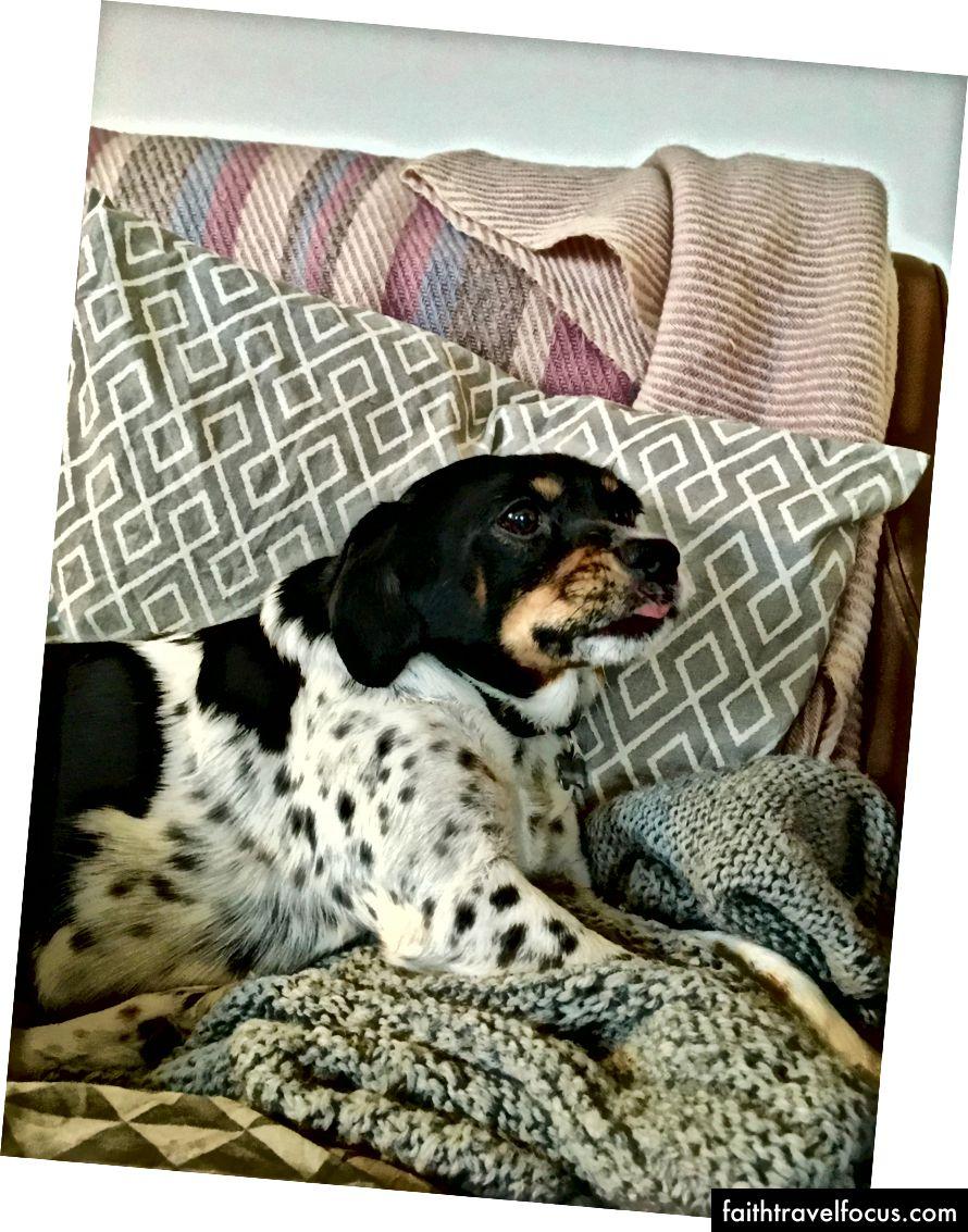 Nhưng có lẽ thành viên tuyệt vời nhất trong gia đình là chú chó đáng yêu của họ, Fiffi. Trên thực tế, có lẽ không, về mặt hiếu khách. Nhưng cô ấy thực sự dễ thương.