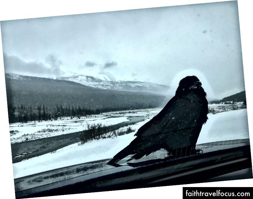 (Một bức ảnh từ cuối tuần khi tuyết rơi.)