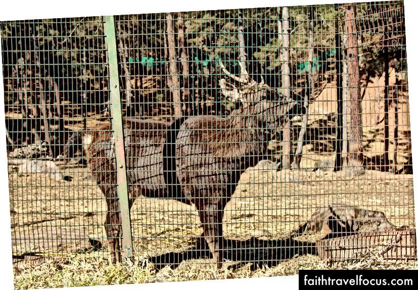 Khu bảo tồn Takin (Động vật quốc gia Bhutan)