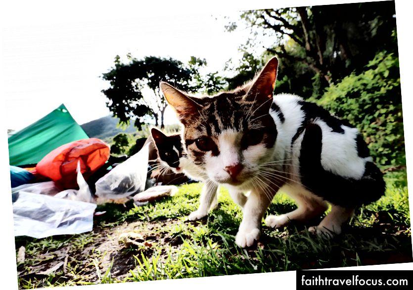 Khu cắm trại mèo