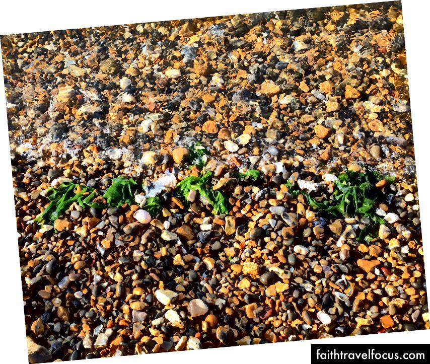 Deniz kıyısında 10 dakika boyunca baktım deniz yosunu, beni sahilden aşağıya kadar izleyen ve beklemek için 10 metre arkamda olmayan adam için bekledim…