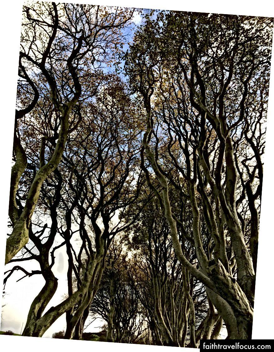Cành cây che khuất cả bầu trời.