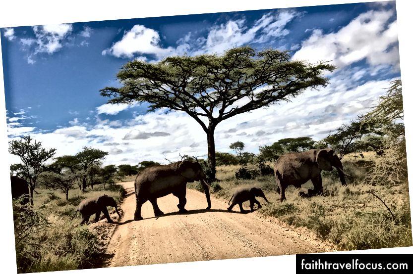 Слонята були мені найулюбленішими! (Кредит на фото: Джессіка Набонго)