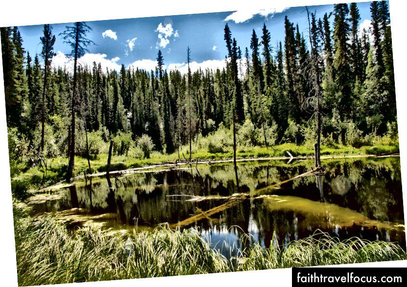 En typisk boreal skogsjø, Flickr