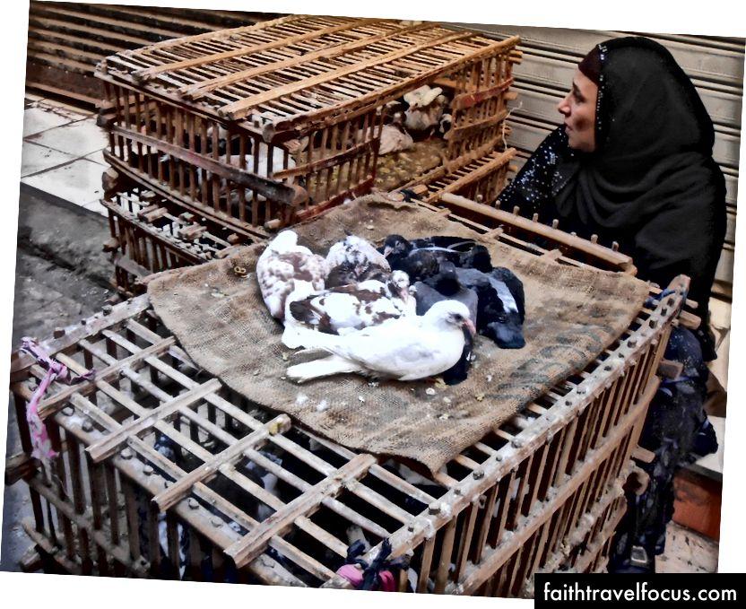 Radwa quản lý những con bồ câu còn sót lại   © Mariam Ghorab