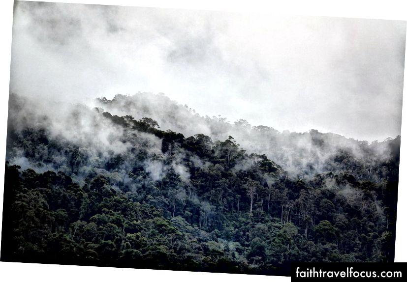Sương mù treo trên rừng mưa nhiệt đới quốc gia Ranomafana | © Vaughn Lewis / Chuyến đi văn hóa