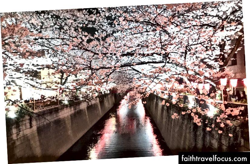 Цвітіння вишні в Токіо - фотографія, зроблена з самого власного Габріеля Ян.