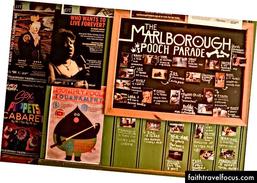 Marlborough yêu chó con rất nhiều, chúng đã có một hội đồng đầy những khách hàng thích chó thường xuyên!