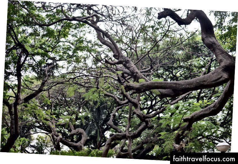 Rất may, mặc dù không có vỉa hè, nhưng có rất nhiều cây tuyệt đẹp.