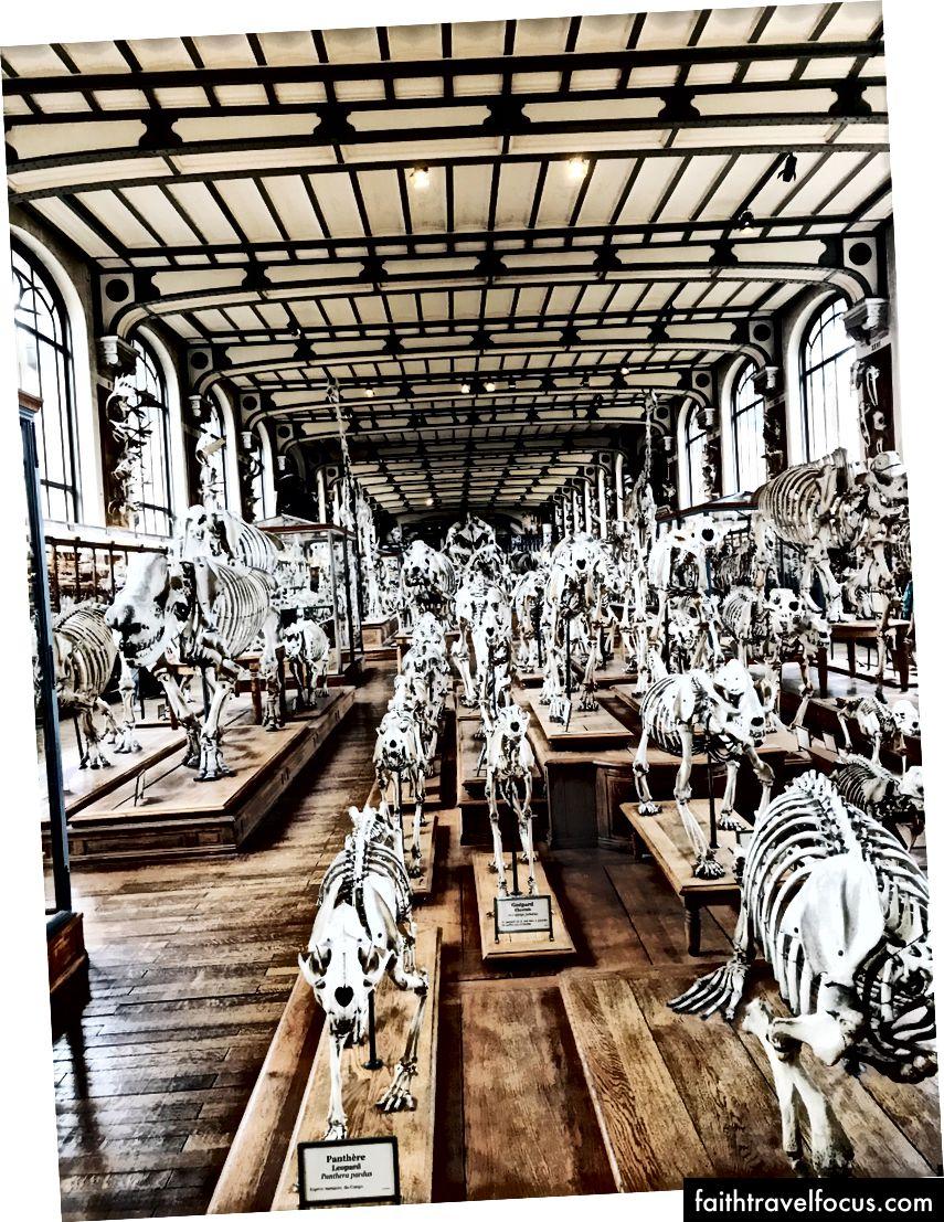 Bảo tàng Lịch sử Tự nhiên Quốc gia, và điều tôi rất yêu thích ở Paris. Các bạn, nó là một nhóm xương.
