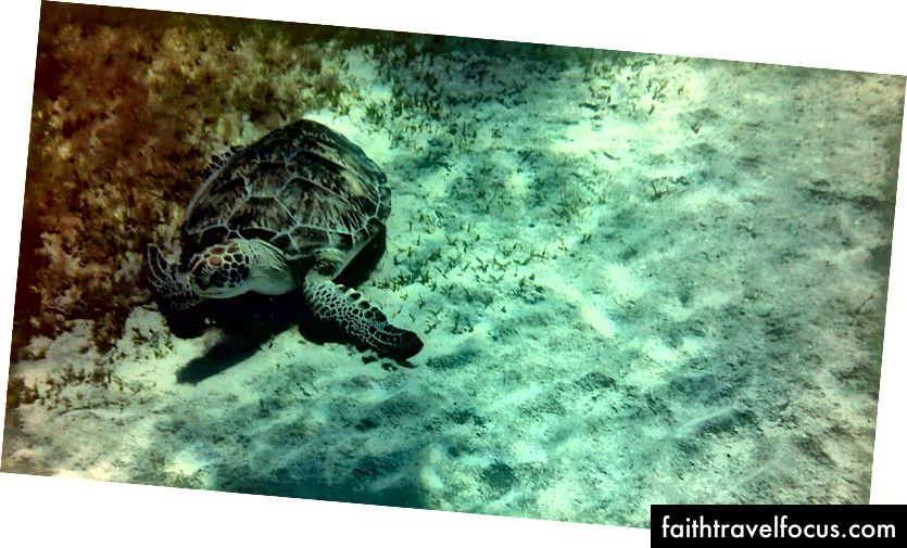 Phát hiện một con rùa biển.