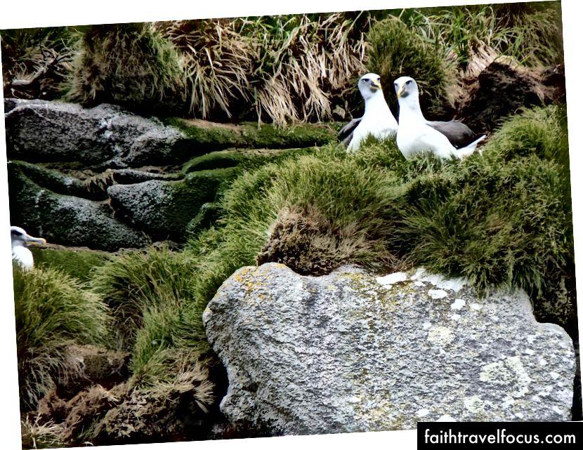 Đảo Snares, New Zealand