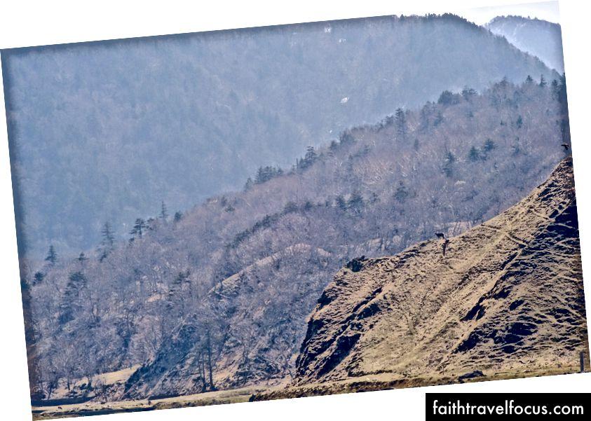 bạn sẽ phải tin lời tôi, nhưng có một con nai trên sườn núi đó.