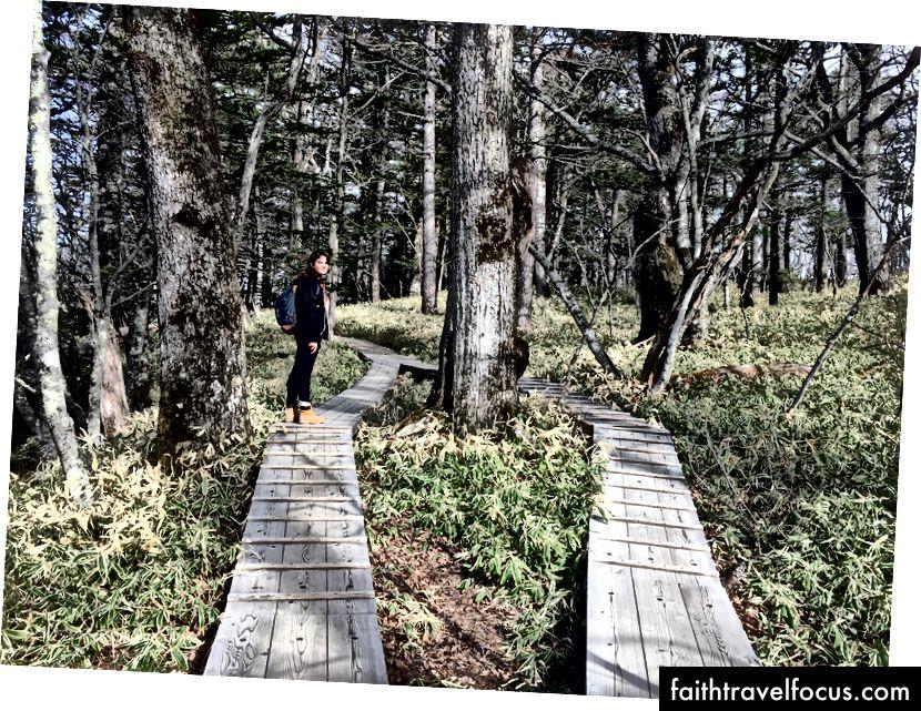 nỗ lực bảo tồn trong công viên quốc gia Nikko