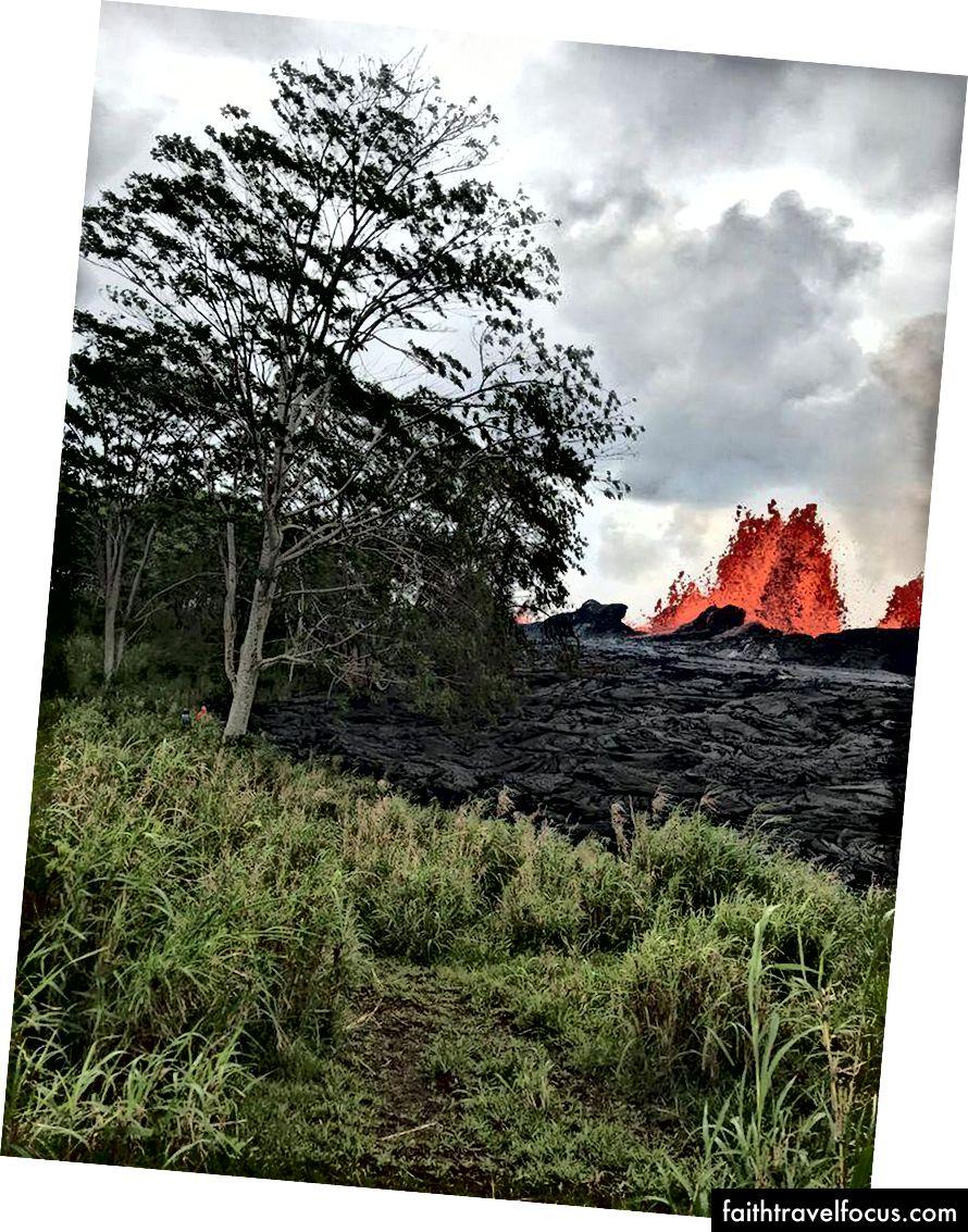 Лава видовищно вивертається з тріщини 22, підноситься над повільно зростаючим лава-бермом нового матеріалу, що виходить із відтоку. Дерево на передньому плані заввишки понад 60 футів, як видно із шкали двох вчених-людей поруч. (USGS-HVO)