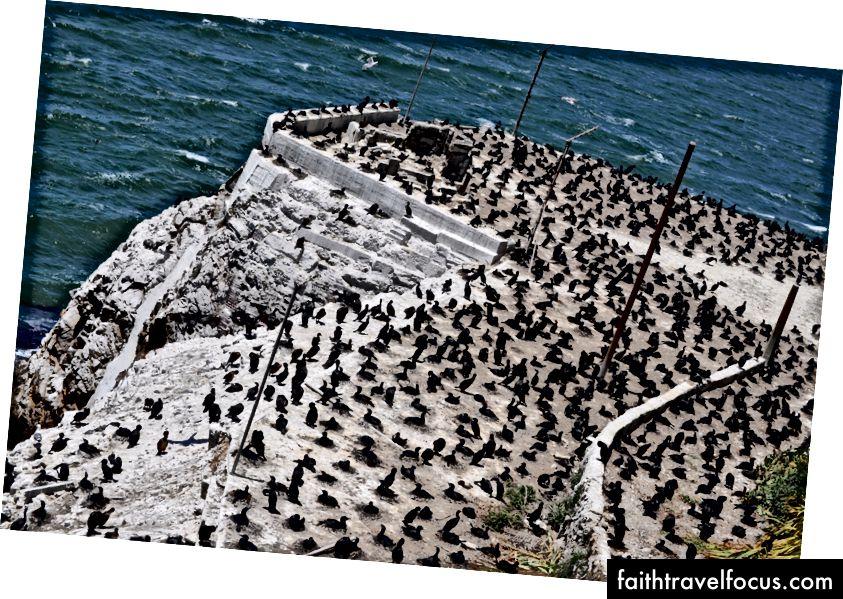 Trái sang phải: những khu vườn với Golden Gate ở phía sau, San Francisco, một số loài chim chillin xông quanh