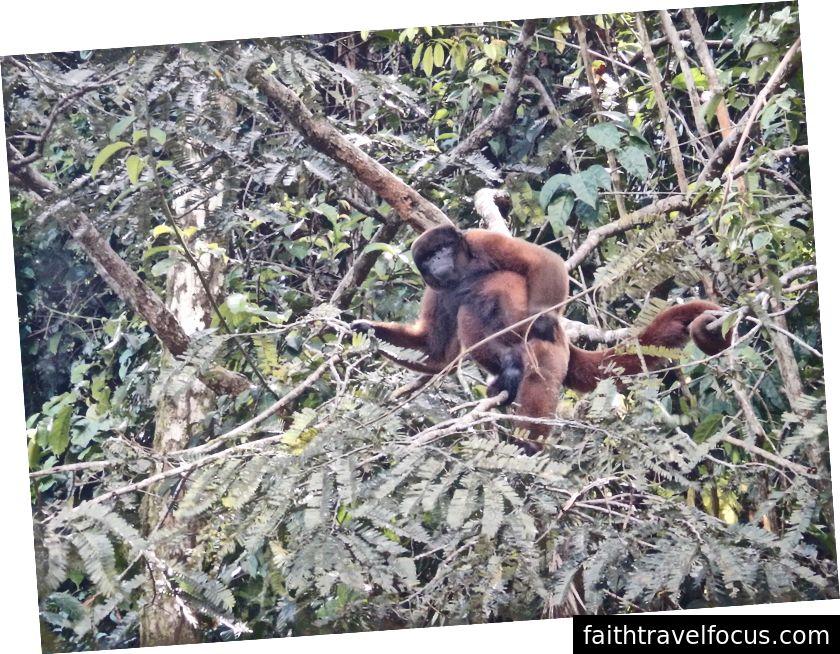 Một người từ chối điển hình của rừng Amazon Peru