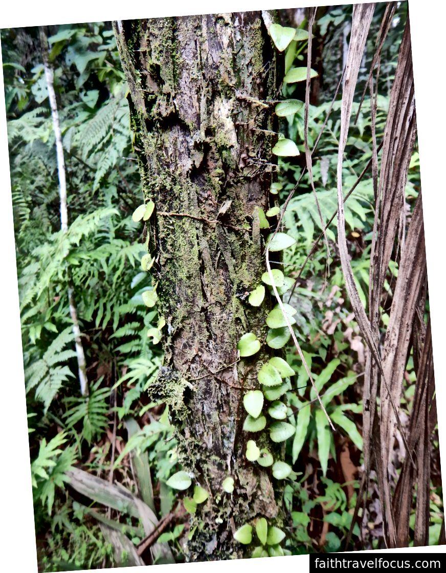 Khu rừng Amazon tươi tốt gần Nhà nghỉ
