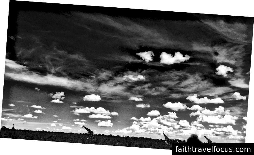 Vườn quốc gia Nairobi- Nairobi, Kenya - Hình ảnh của Digital_lala
