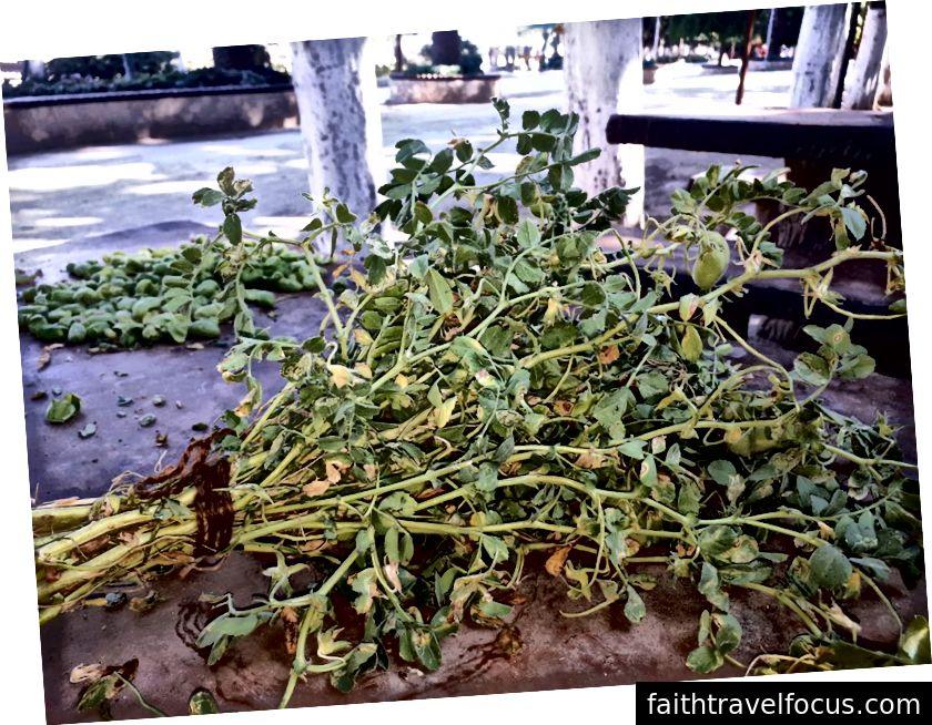 Đậu Hà Lan tươi để bán ở Antakya, một lira một bó; lá cũng được ăn