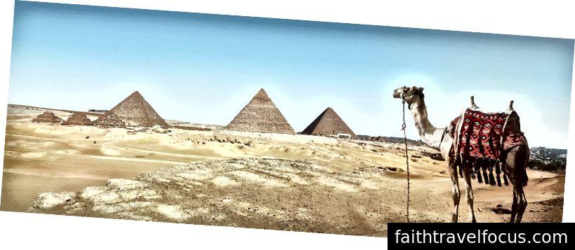 Tôi ước mình đang ở Ai Cập ngay bây giờ, nhưng thậm chí nhìn vào con lạc đà này cũng khiến tôi cảm thấy tốt hơn. (Ảnh của Simon Matzinger từ Pexels)