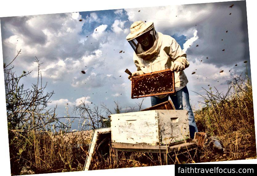Đi nuôi ong trong ngôi làng trên đỉnh Umm Qais (dân số: 7.000) với người dẫn chương trình Airbnb Experience Experience Yousef Al Sayah và ba triệu đối tác kinh doanh thiểu số của anh ấy.