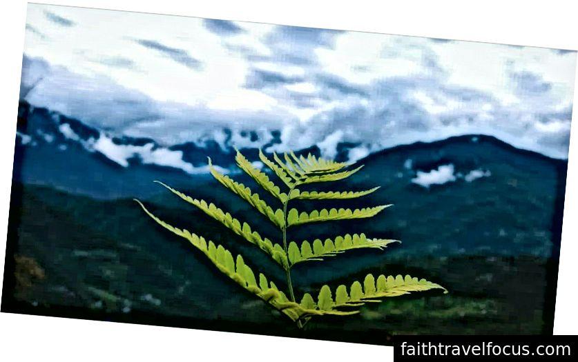 Nhiếp ảnh của Vishnu Suresh