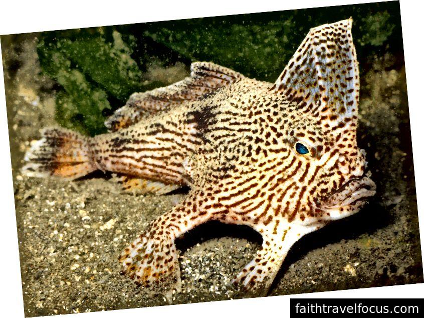 Crawlong Fish, nguồn: https://news.nationalgeographic.com/news/2008/04/080403-fish-photo.html