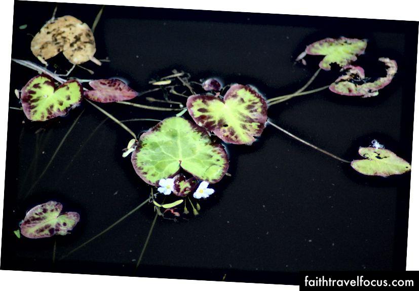 Trái tim nổi, hình ảnh Flickr