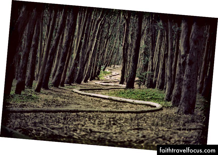 """""""Ağaçlarla çevrili yolun manzara fotoğrafçılığı"""", James Forbes tarafından Unsplash'da"""