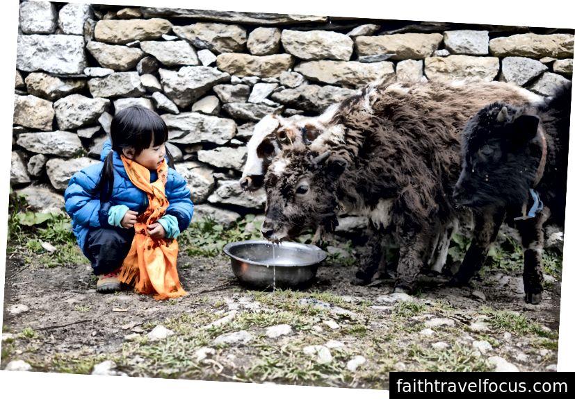 Маленька чау, яка годує дитину яками.