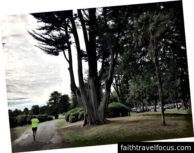 Turumuzda durduğumuz parkta bir ağaç, Kathy'nin özellikle sevdiği