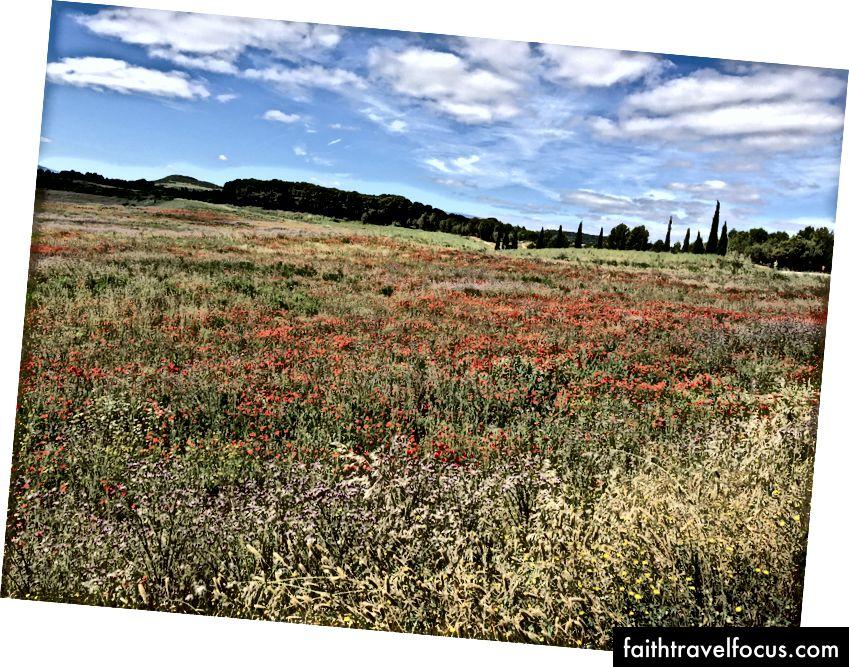 Nicole Akers Cảnh hình ảnh của cánh đồng anh túc trong khi đi bộ El Camino de Santiago