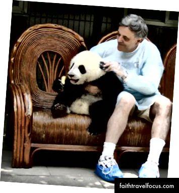 Panda cub ở Thành Đô, Trung Quốc