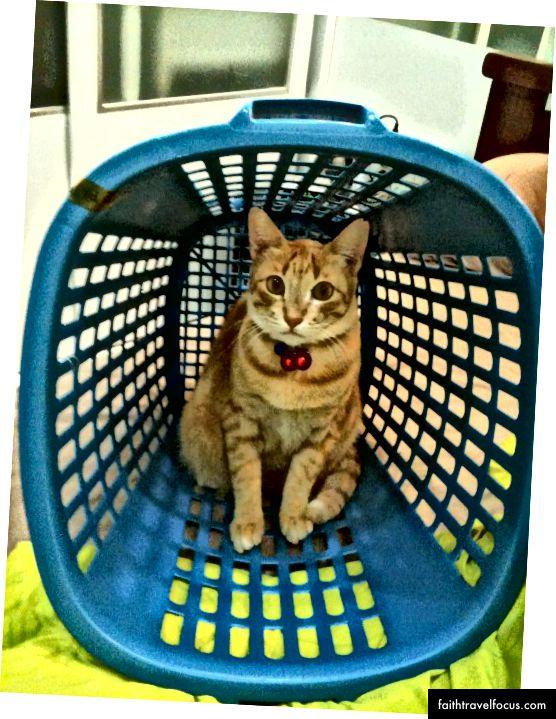 Con mèo của tôi ở Malaysia