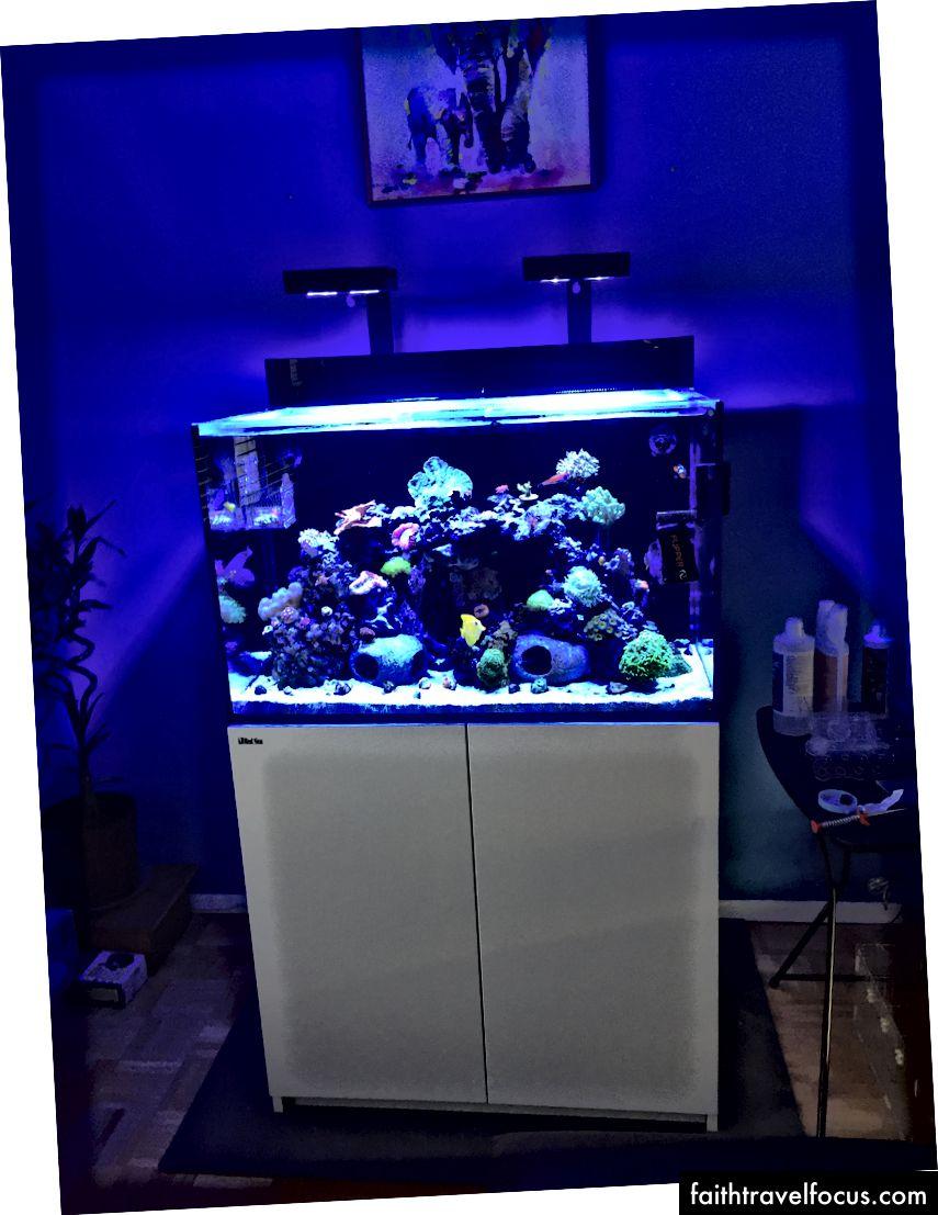 Bể san hô của tôi