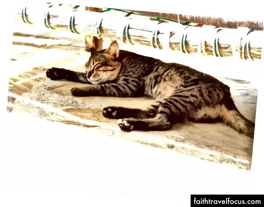 Một con mèo nhìn thấy, bên dưới một chiếc ghế bên cạnh hồ bơi.