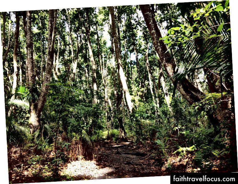 Ormanda bir gün.