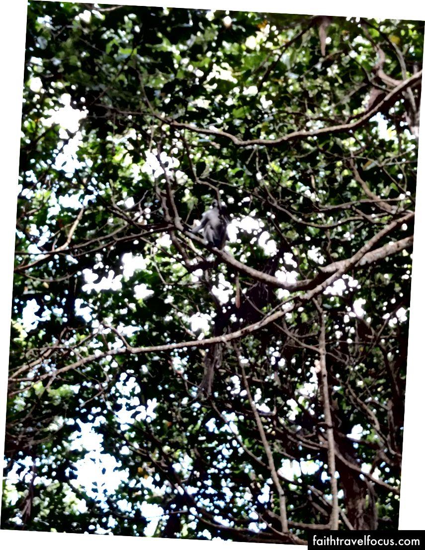 คุณสามารถมองเห็นลิงทางขวาได้ไหม?