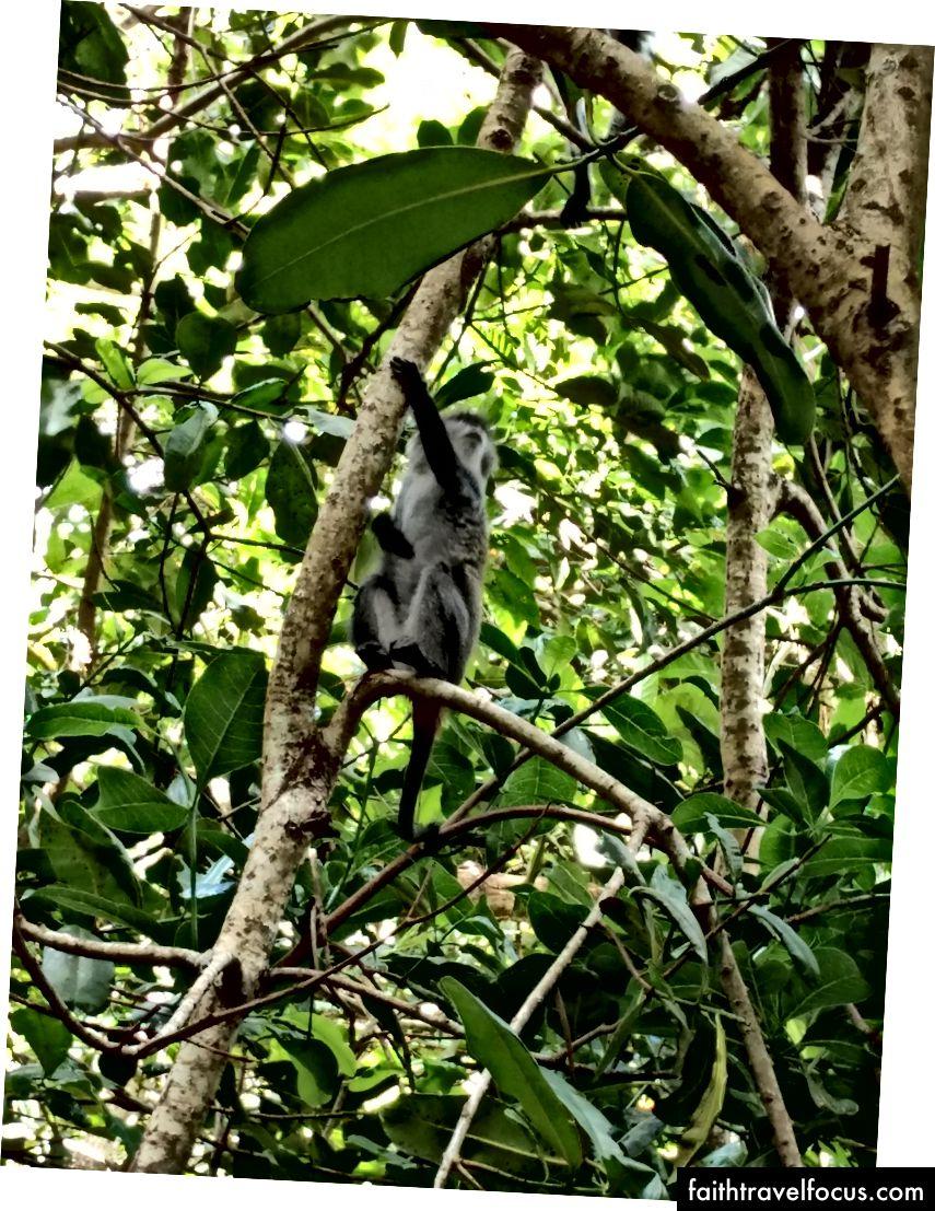 Dừa và khỉ