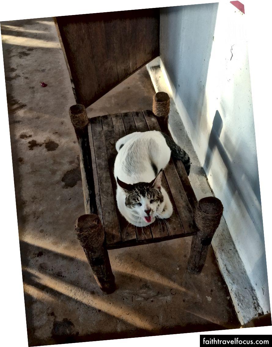 Позіхаючий кіт