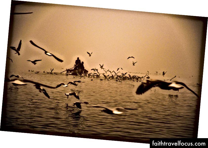 Måker og tåke på Ganges, foto © Erika Burkhalter