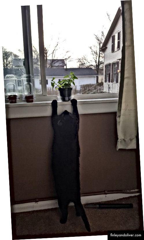 Reachin 'för den catnip-växten!