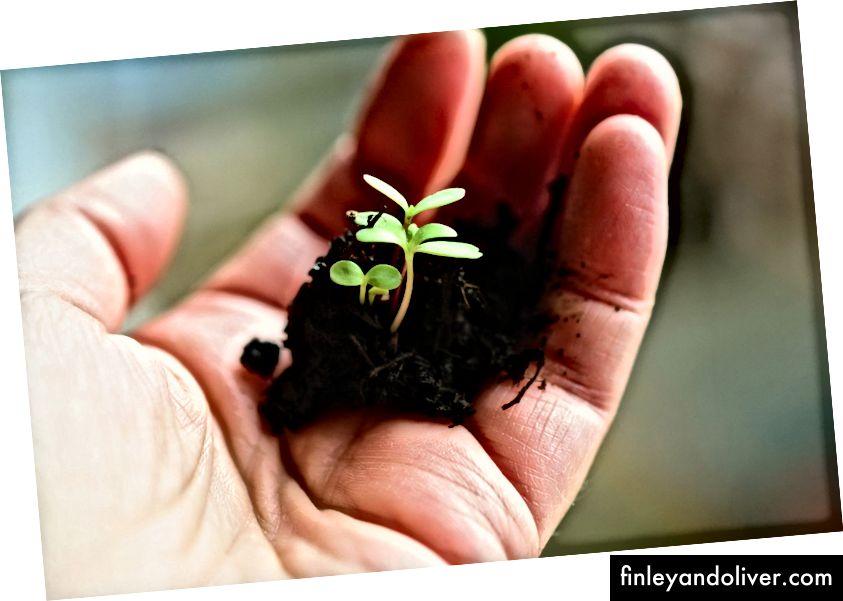 Θέλω πάντα να καλλιεργώ την ανάπτυξη στη ζωή μου. Πιστωτική εικονογράφηση εικόνας: Στενίλ